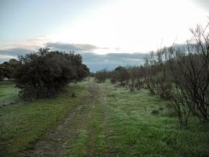 Zwischen Grimaldo und Riolobos