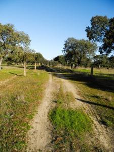 Zwischen Alcuéscar und Casas de Don Antonio
