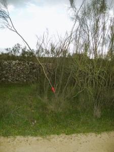 Zwischen Monesterio und Fuente de Cantos
