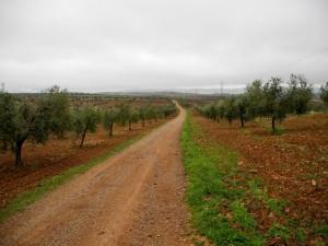 Zwischen Zafra Zwischen Los Santos de Maimona und Villafranca de los Barros