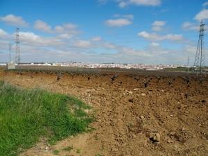 Zwischen Los Santos de Maimona und Villafranca de los Barros